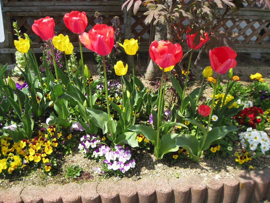 色鮮やかに花壇が賑わっています